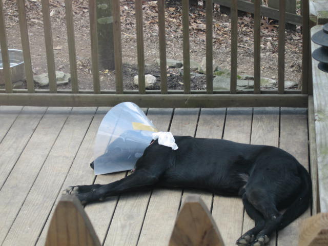 Sleeping with a cone